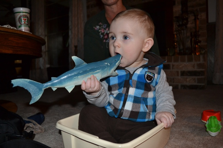 eating his first shark