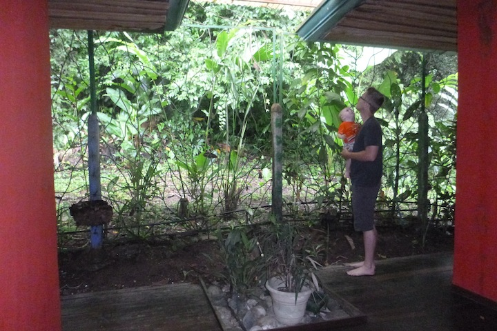 the back of our room faced the jungle.