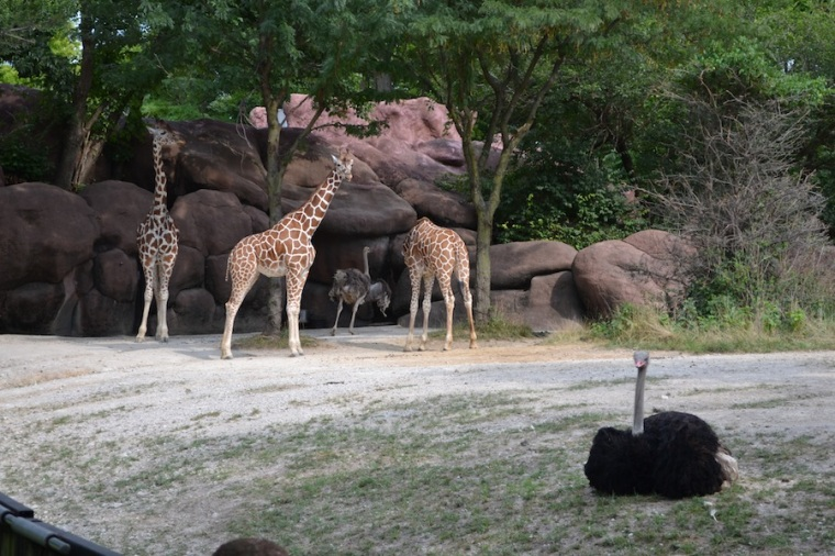 The Zoo was awesome (if that's what you're into...)