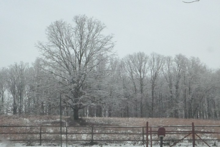 Every tree was wrapped in a blanket of snow!