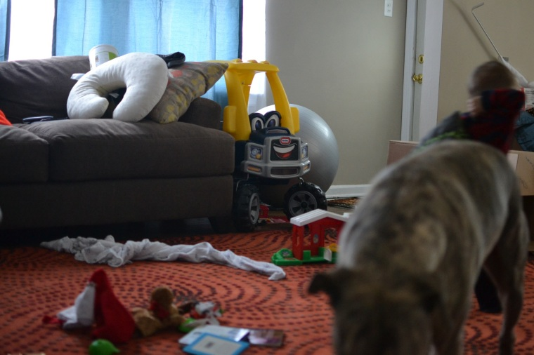 a regular scene at my house... IS that some canned food on my couch?  yes, yes it is. There are usually cans of food on the floor too.