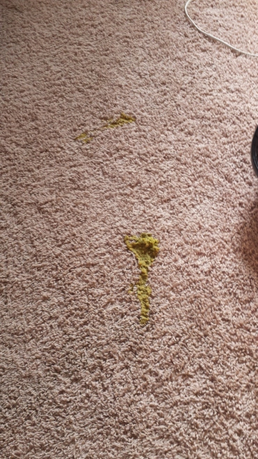 Came home from church to find dog puke on my bedroom floor...grrrr.