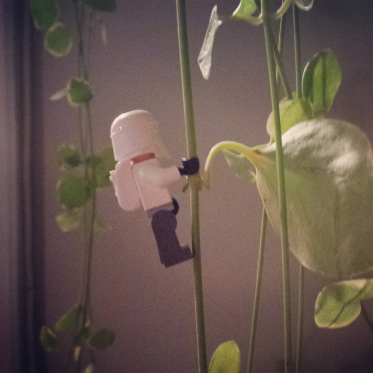 Do you ever feel like a tiny Lego man trying to climb up a hanging plant? Will this ever end???