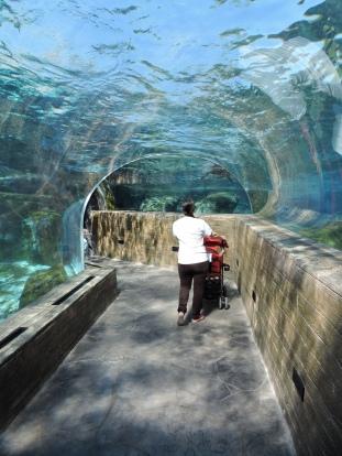 Love the Sea Lion exhibit too.