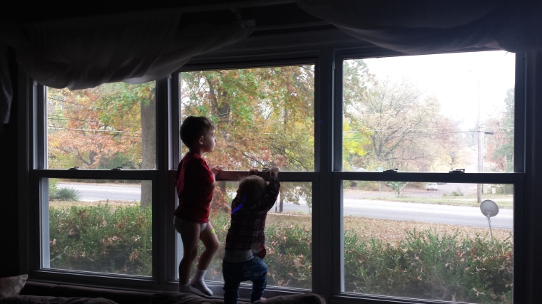 The boys get a bit wild - tearing down my window curtains and peeing on my furniture.